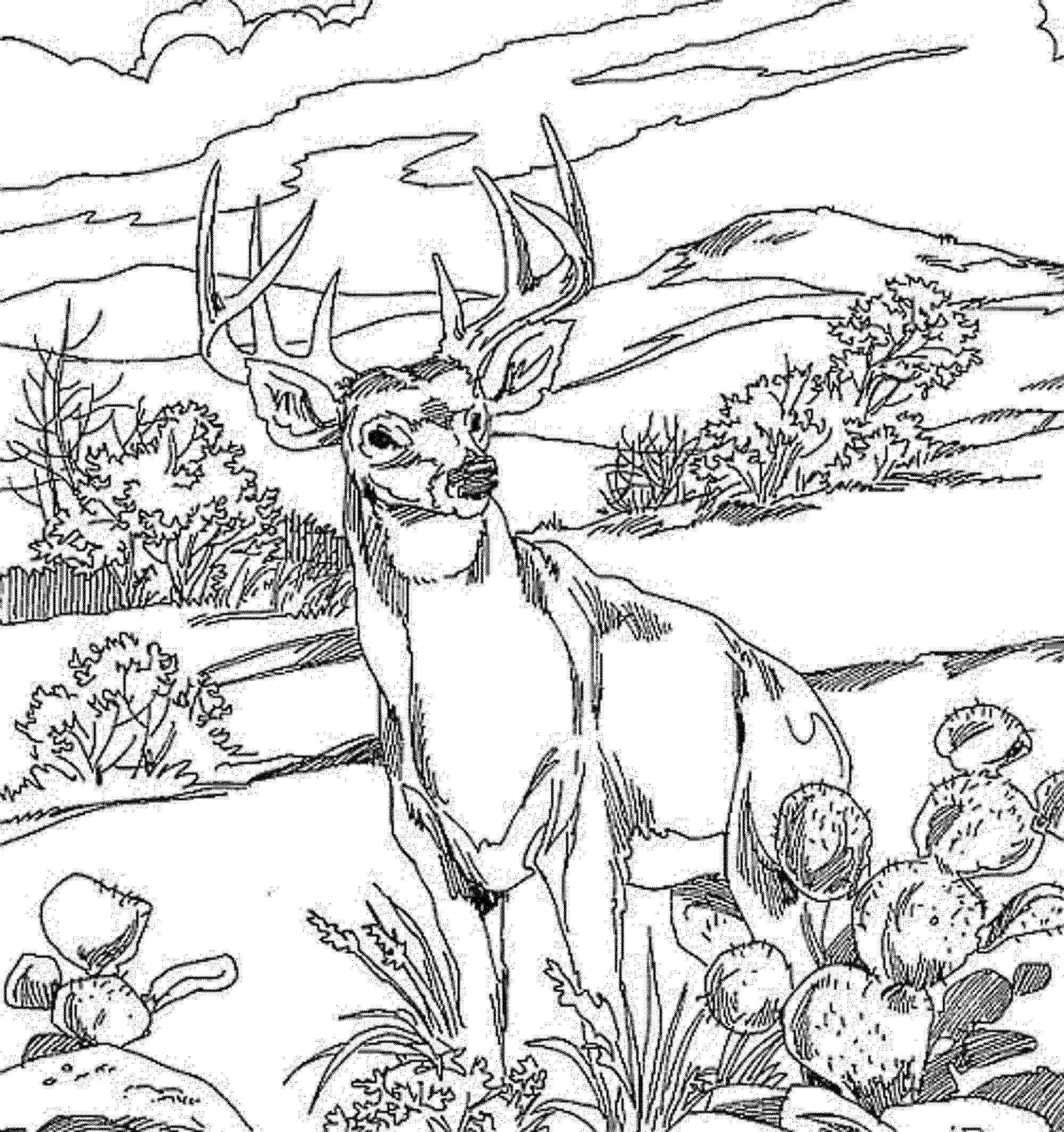 Forest Animals Coloring Pages Forest Animals Coloring Pages 8 ... | 2128x2000