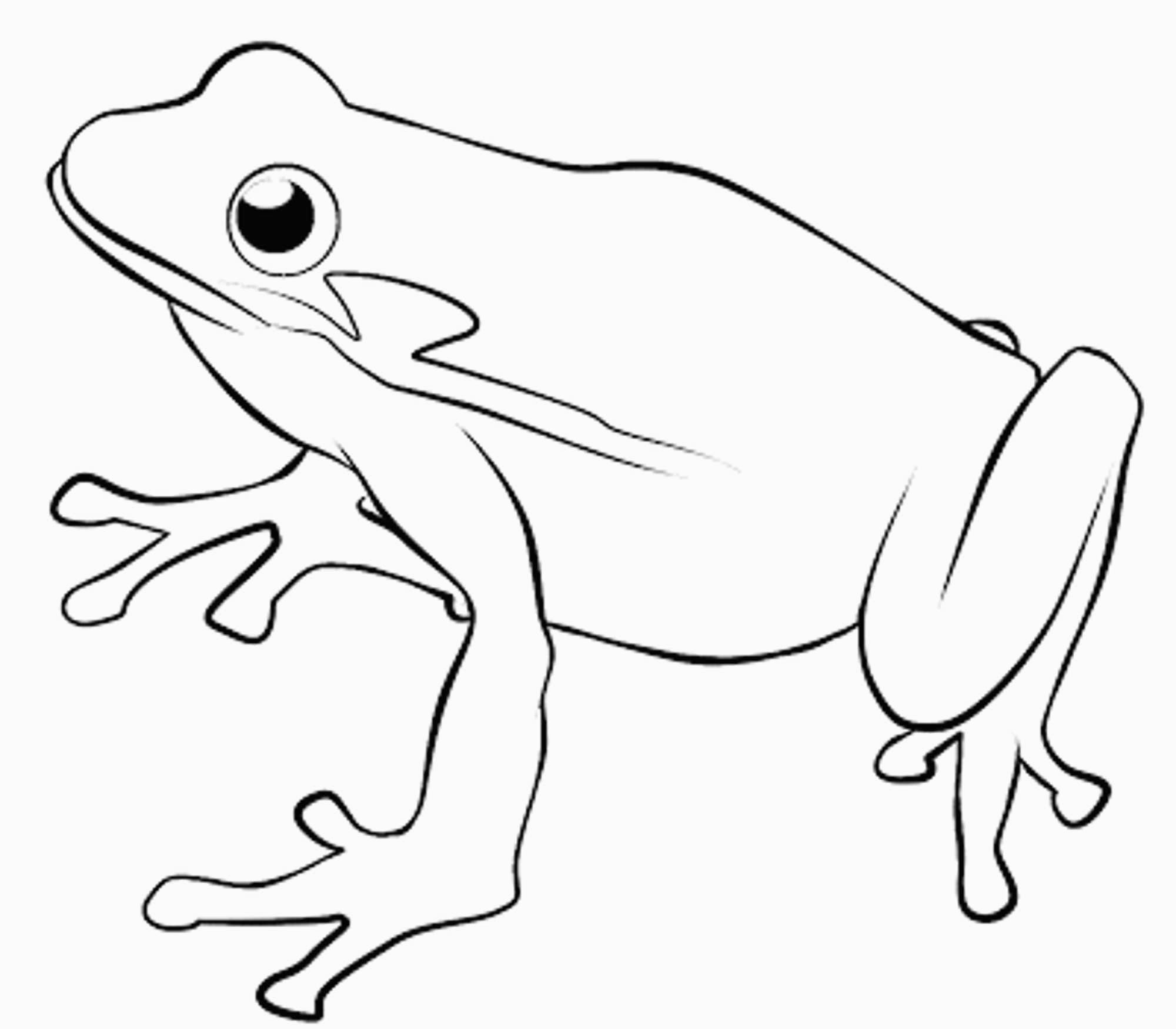 Frogs to color for kids - Frogs Kids Coloring Pages | 1750x2000