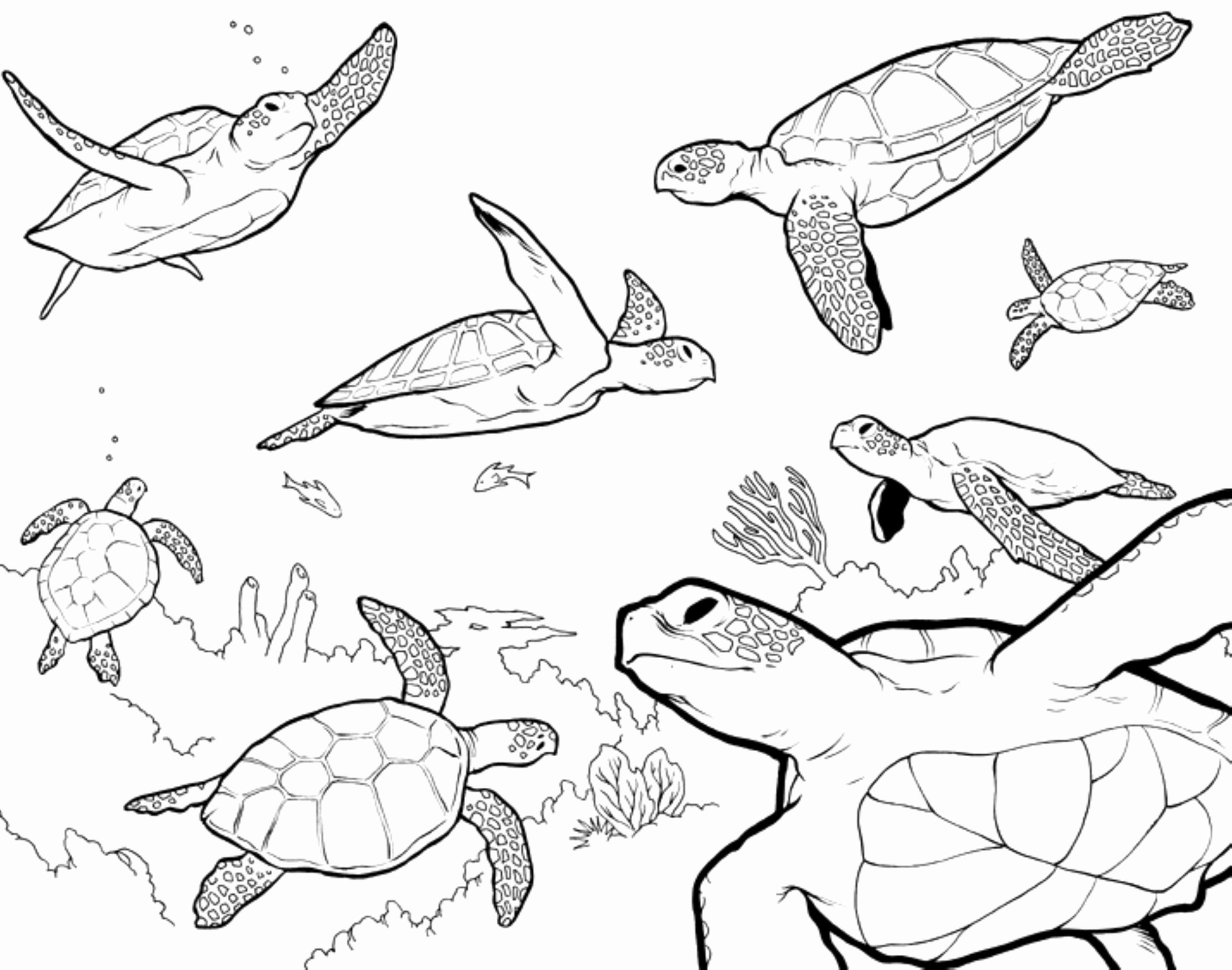 Sea Turtle Coloring Page Unique Loggerhead Sea Turtle Coloring