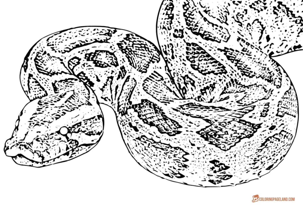 Snake Coloring Pages Coloring Page Snake Coloring Pages