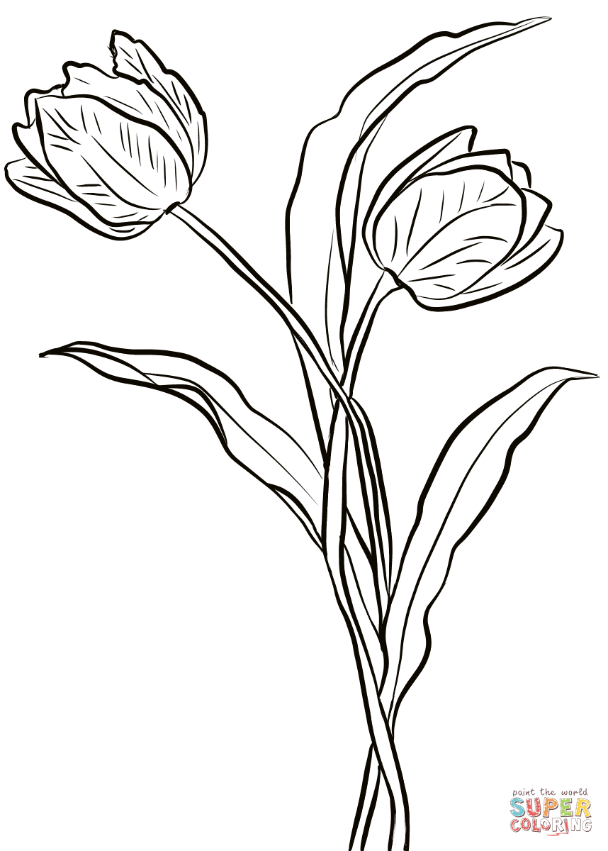 photograph relating to Tulip Printable named Tulip Coloring Webpages 2 Tulips Coloring Web page Totally free Printable